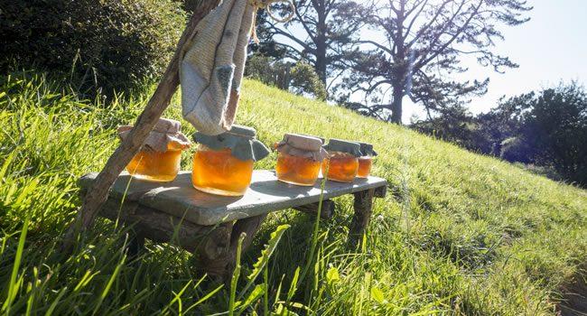 Quemaduras Del Sol: La Miel Como Remedio Natural